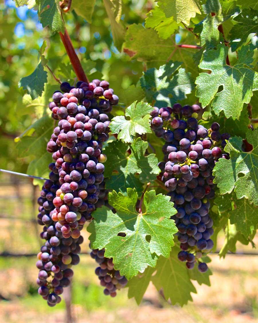 Consigli per togliere le macchie di vino rosso