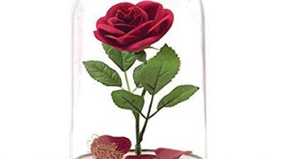 La Rosa di La Bella e La Bestia: sì, la voglio